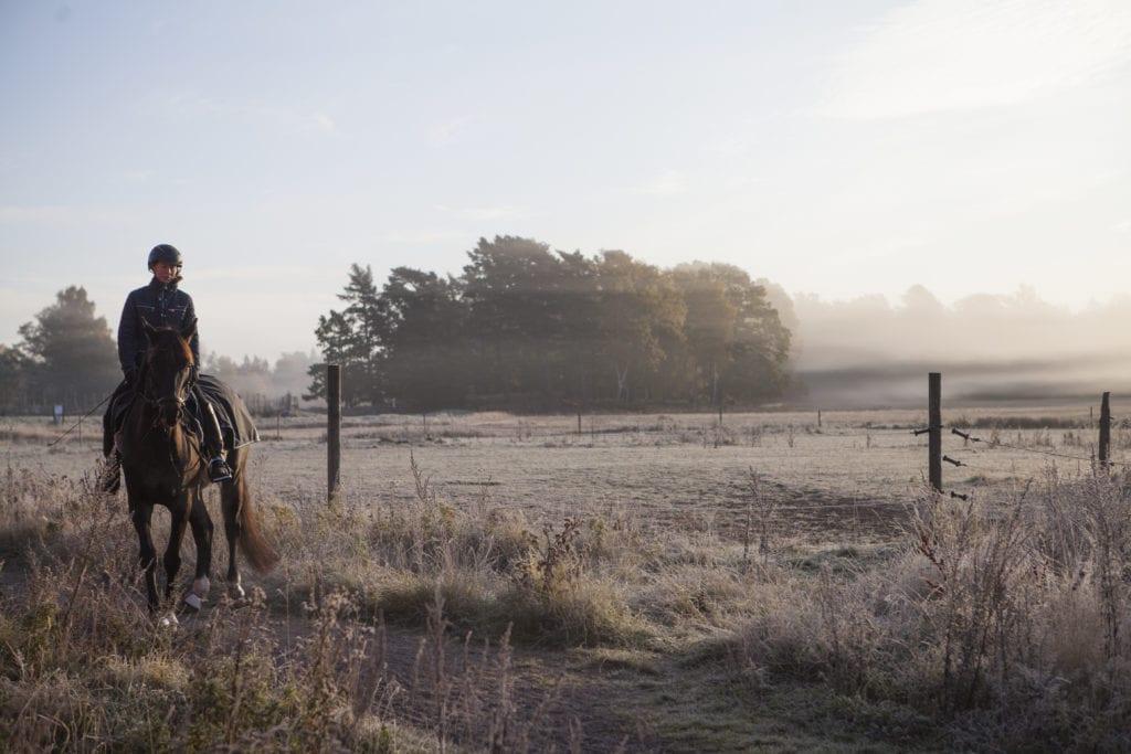Häst med ryttare i en dimmig hage